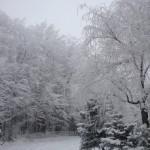 Άποψη του κτήματος το χειμώνα,2009