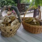 Άγρια μανιτάρια