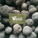 Φρέσκες καλοκαιρινές τρούφες (tuber aestivum)