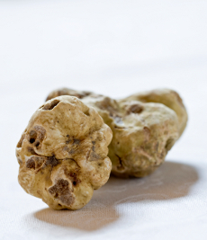 two original white Alba truffle